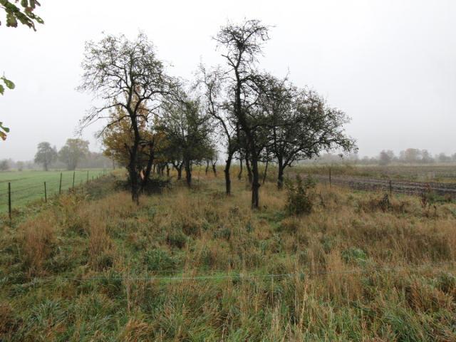 Landwirtschaftliche Fläche Buxtehude